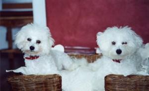 Lili and Tinker